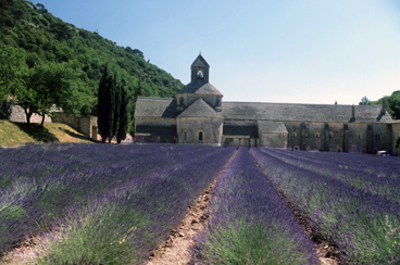 The Lavender Route